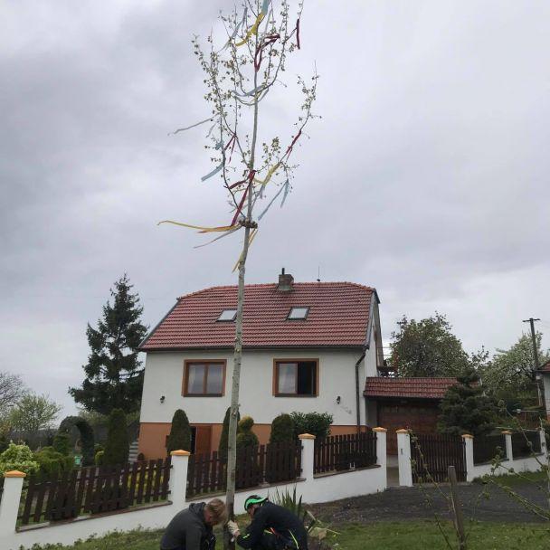 Tradičné stavanie mája