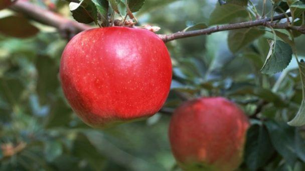 Pozvánka na výstavu jabĺk