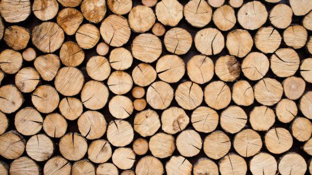 Urbárska spoločnosť – pozemkové spoločenstvo Rybník _Palivové drevo