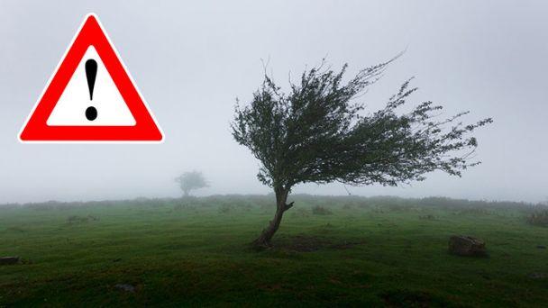 Na Slovensko dorazí silný vietor. Meteorológovia vydali výstrahy