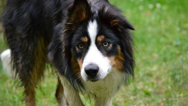 Prihlásenie psa do evidencie a na daňovú povinnosť